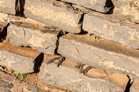 Lizards on a wall in Parque de Santa Catarina