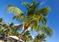 Palm trees at Nanny Cay