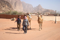 EW0511B-D02139 : Camels being led through the township of Wadi Rum, Jordan