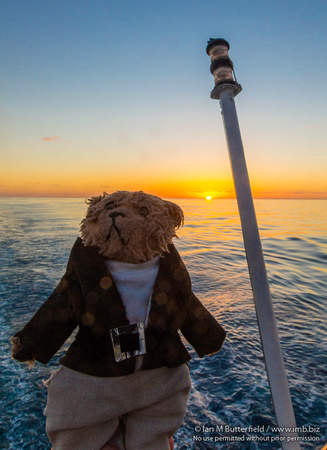 Beni, a teddy bear, watches the sunset on the Marco Polo