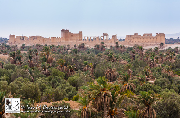 The Oasis of Palmyra