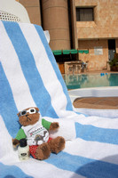 EW0511D-D02213 : Beni, a Teddy Bear, relaxing at the Crown Plaza, Petra, Jordan
